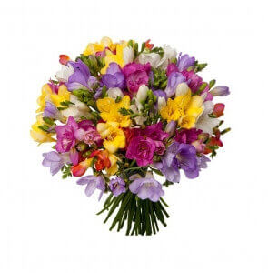 Frezijos - Gėlių pristatymas į namus Mažeikiuose