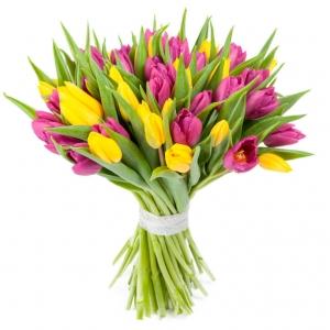 Geltonos ir violetinės tulpės