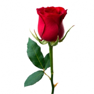 Raudonos rožės - Gėlės į namus Vilniuje
