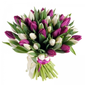 Tulpės violetinės - baltos - Gėlių pristatymas į namus Vilniuje
