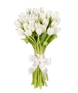 Baltos tulpės