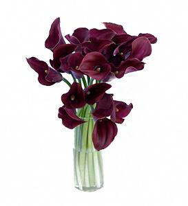 Violetinės kalijos